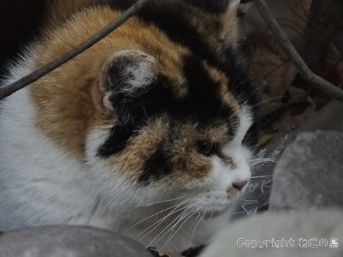 hibiyapark-cats123