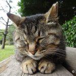 稲毛海浜公園の猫たち(アクセス、猫の探し方)