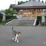 福井の猫寺「御誕生寺」の旅行記