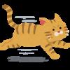 猫よけグッズ – ペットボトルは効果なし。野良猫を優しく追い払う、おすすめの方法