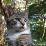 紅葉の三渓園は猫も見ごろ【横浜】