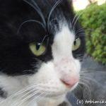 川口自然公園、さぎ山記念公園(埼玉県さいたま市)をハシゴして猫一匹
