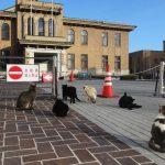 山梨県庁の猫たち 【甲府】