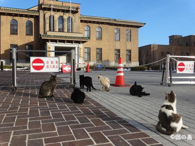 山梨県庁の猫たち 【甲府】 | 猫...