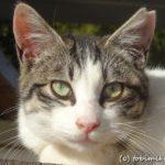 名古屋港で出会った猫たち