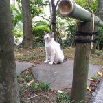 東京の猫寺 – 豪徳寺と護国寺にて、猫と招き猫にであう