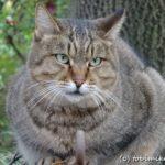 大田区の猫の森 – 平和島公園、平和の森公園、大森ふるさとの森公園