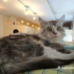 猫の博物館(伊豆)の訪問記・アクセス
