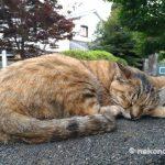 東京の下町「谷根千」(谷中・千駄木・根津・日暮里)は猫の街