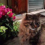 赤羽の猫 – ほぼ野良猫