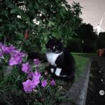 若洲海浜公園の猫たち